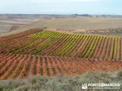 Enología en Rioja - Senderismo Camino de Santiago; rutas senderismo valencia